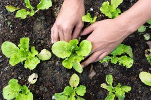 gardening at your home